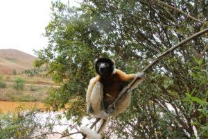lemurpark 09 lem4