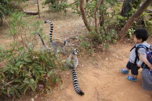 lemurpark 11 lem