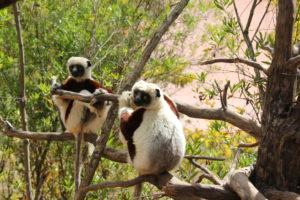 lemurpark lum1
